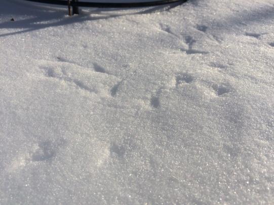 Bird footprints in the snow beneath the feeder